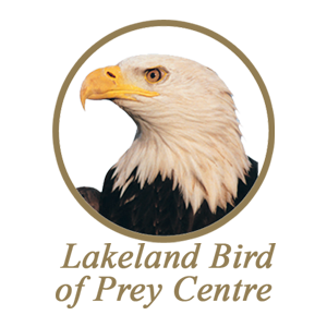 lakeland-bird-of-prey-centre