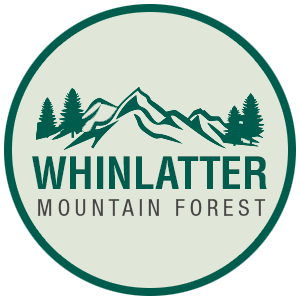 Whinlatter